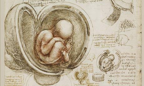 Leonardo's schets van een foetus