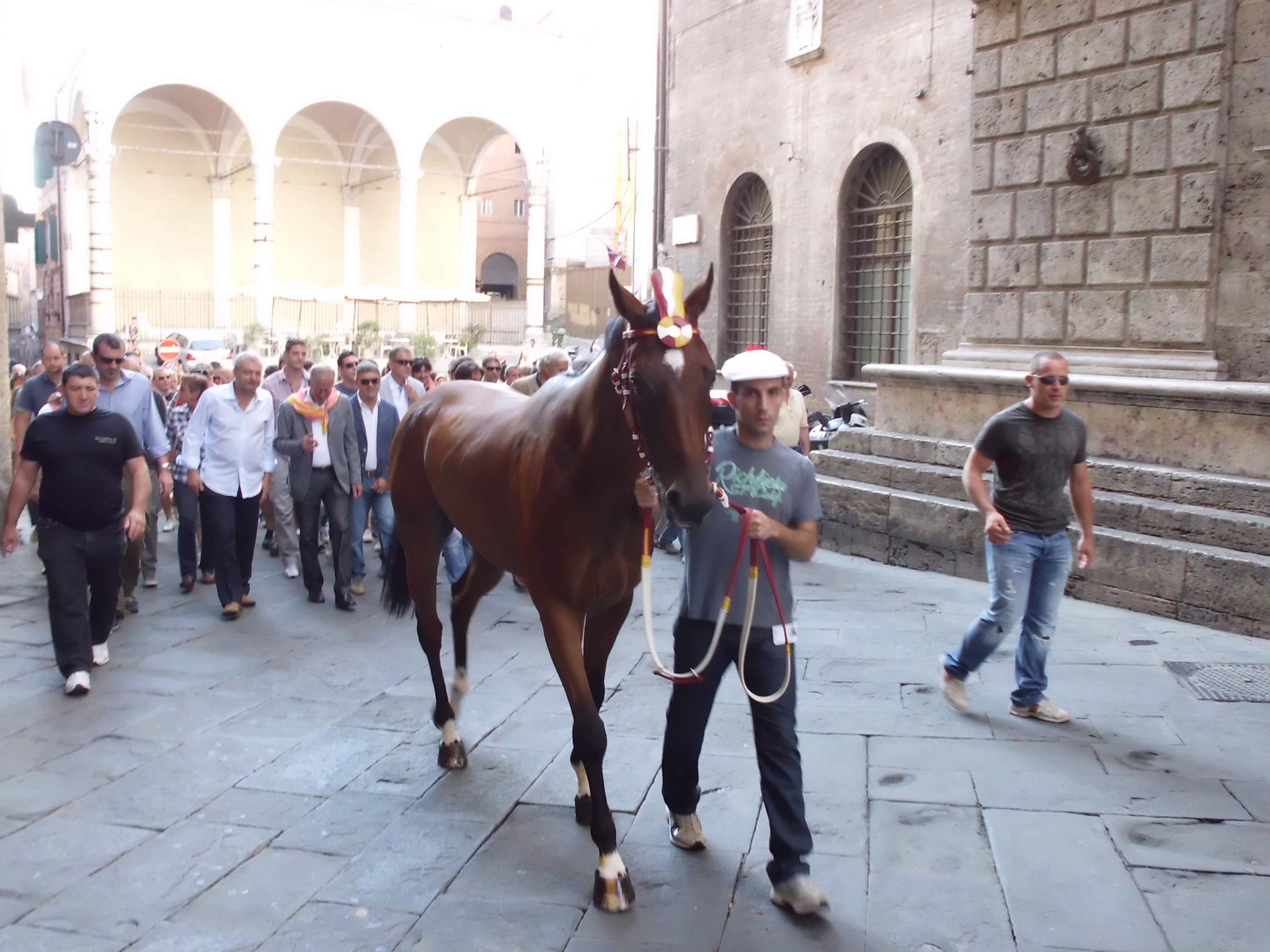 Tips voor de Palio van Siena, Italie Uitgelicht3