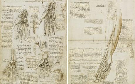 Leonardo Da Vinci, De botten, spieren en pezen van de hand en spieren en pezen van het onderbeen en voet, c.1510-11