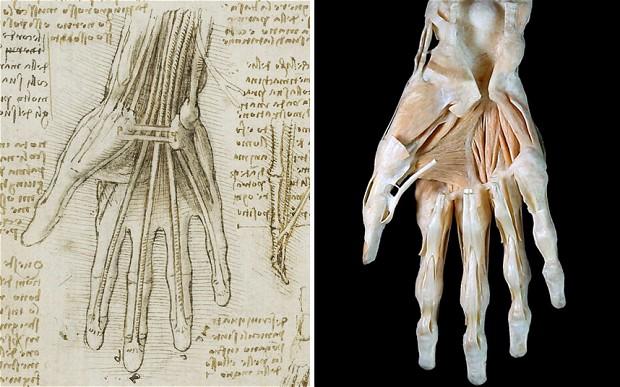 Leonardo da Vinci, De botten, spieren en pezen van de hand c.1510-11 en 3D afbeelding van een hand