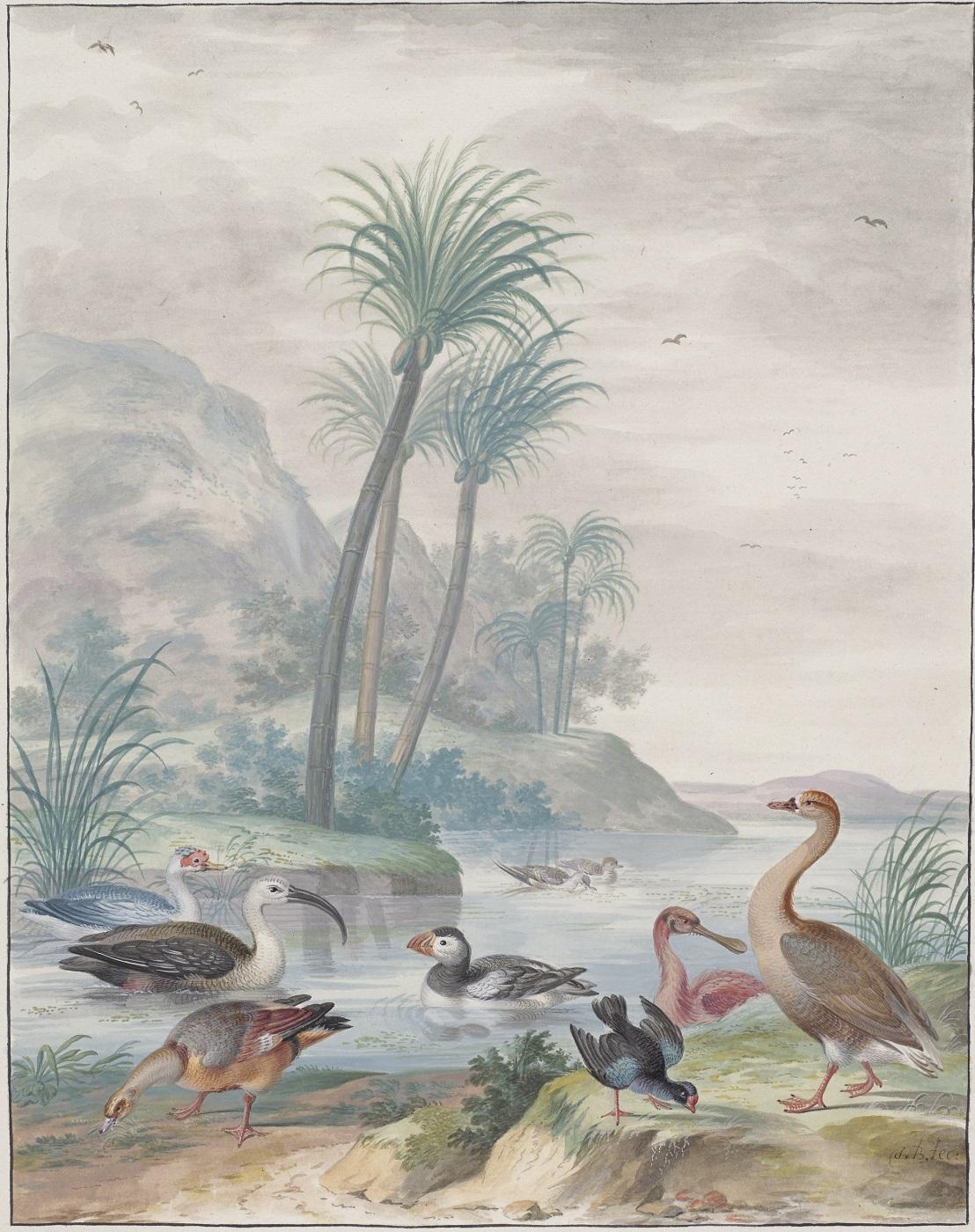 Johannes Bronckhorst, Exotische watervogels in een landschap, foto © Rijksmuseum Amsterdam