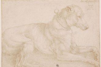 Albrecht Dürer, Een hond rust uit, 1520, zilverpunt over resten van houtskool op geprepareerd papier, British Museum, London