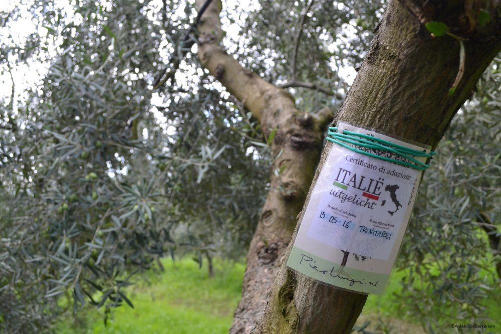 Een olijfboom adopteren in Puglia