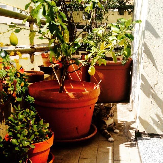 Lucca verstopt zich voor de zon in Turijn