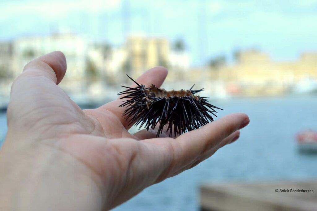 Ricci of zee-egels eten in de haven van Bari in Puglia