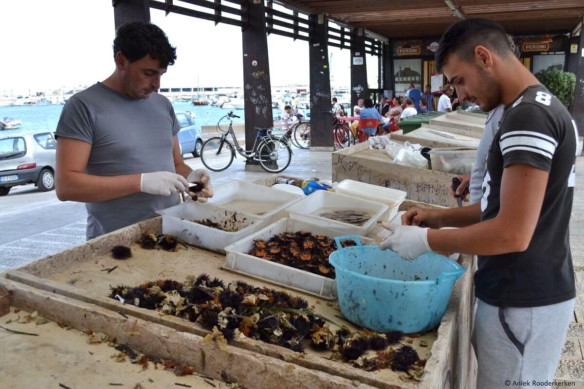 Vissers maken de vangst van de dag schoon