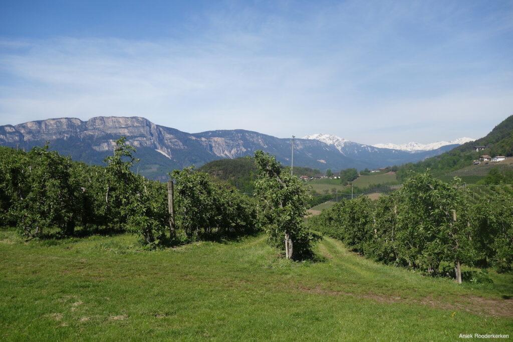 De appelgaarden van de Wernerhof-Bolzano