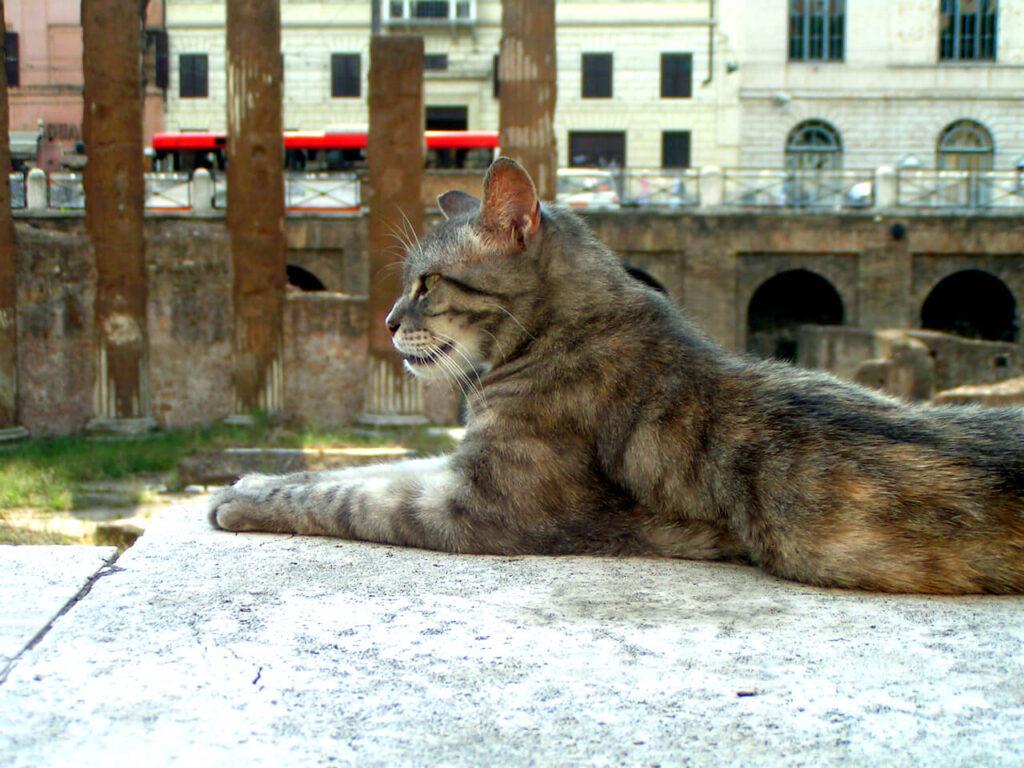 Ontmoet de katten van Largo di Torre Argentina