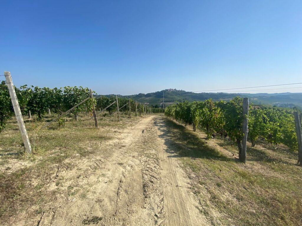 Wijngaard in Piemonte